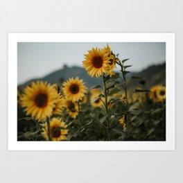 German sunflower field near mountain | Colourful Travel Photography | Waldkirch/Freiburg, Germany (Europe) Art Print
