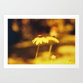 Rescale Flower (3) Art Print