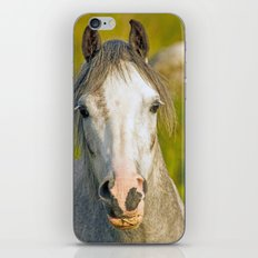 Welsh Pony  iPhone & iPod Skin