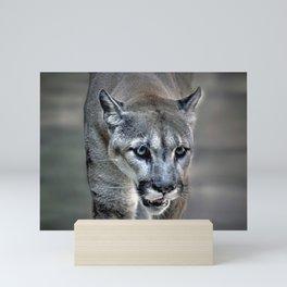 Wild Cat Mini Art Print