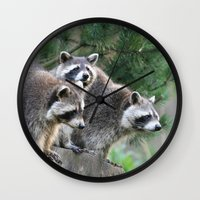 racoon Wall Clocks featuring Racoon 001 by jamfoto
