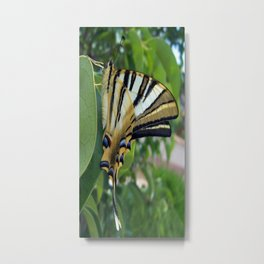 Swallowtail With Partially Closed Wings Side View Metal Print