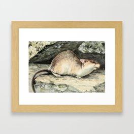 Fuertes, Louis Agassiz (1874-1927) - Burgess Animal Book for Children 1920 (Wood Rat) Framed Art Print