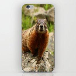 On The Rocks Marmot iPhone Skin