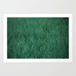 northern grains Art Print