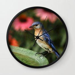 Perched Eastern  BlueBird Wall Clock