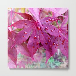 Red Maple Tree Metal Print