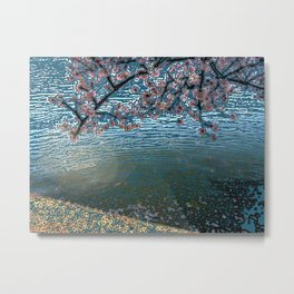 Cherry Blossoms Over Water Metal Print