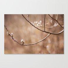 Willows Canvas Print