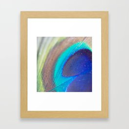 Peacock feather - Macro Photography Framed Art Print