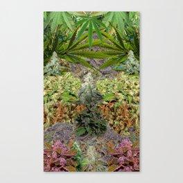 Marihuanaaas Canvas Print