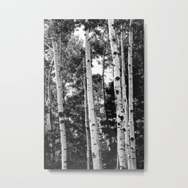 Aspen Forest - Black And White Nature Photography Metal Print