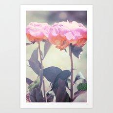 Pink Peony 14 Art Print