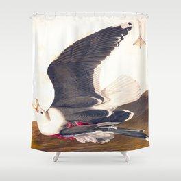 Black Backed Gul John James Audubon Scientific Vintage Illustrations Of American Birds Shower Curtain