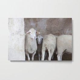 Sheep in a Natural Cave Metal Print