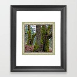 TWO BIG LEAF MAPLE TREES Framed Art Print