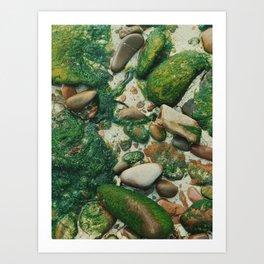 Moss-Covered Rocks in Isle of Skye, Scotland Art Print