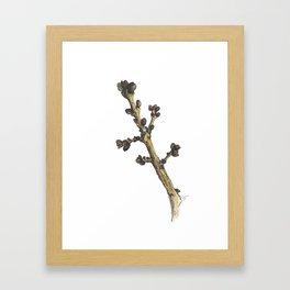 sprig Framed Art Print