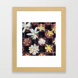 Succulent Squares Framed Art Print