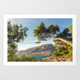 Maritime pine trunk in French Riviera in a sunny day Art Print