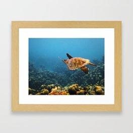 Caribbean Turtle Framed Art Print