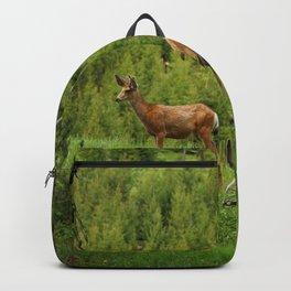 Wapiti In Yellowstone N P Backpack