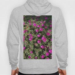 Magenta Portulaca Grandiflora Succulent Flowers Hoody