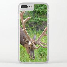 Elk with his velvet in Jasper National Park Clear iPhone Case