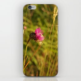 Carduus acanthoides plant, Dolomiti mountains, Italy II iPhone Skin