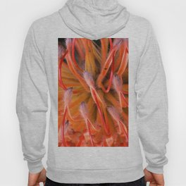 The Visitor on Red Protea Hoody