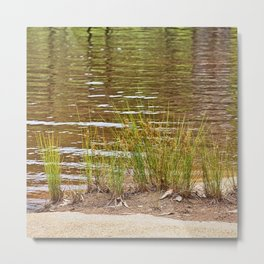 Beautiful River Grass Metal Print