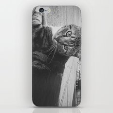 Street Kitty iPhone & iPod Skin