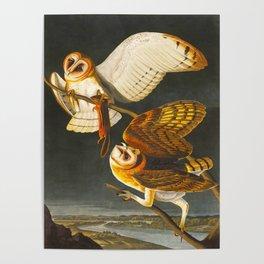 Barn Owl Hand Drawn Illustrations Vintage Scientific Art John James Audubon Birds Poster