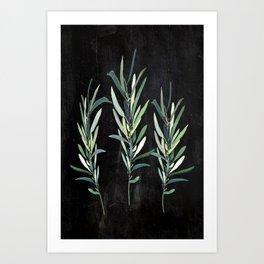 Eucalyptus Branches On Chalkboard Art Print
