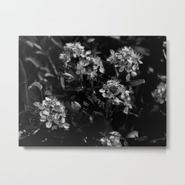 Stopping to Smell the Flowers at the Top of the Mountain Black & White Metal Print