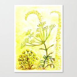 Tansy and Great mullein Canvas Print