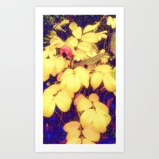 Soft Autumnal Art Print