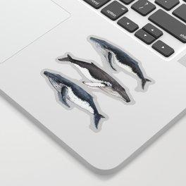 Humpback whales Sticker