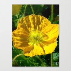 Golden Poppy Canvas Print