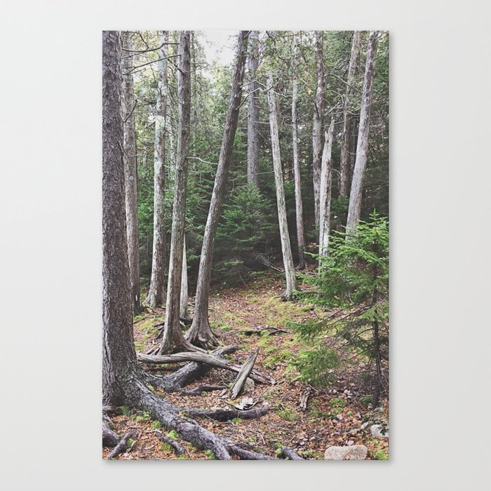 Maine Woods Canvas Print