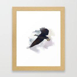 american bald eagle in flight ,watercolor painting Framed Art Print
