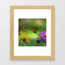 Ladybug In Search Framed Art Print