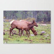 Snoqualmie Valley Elk Canvas Print