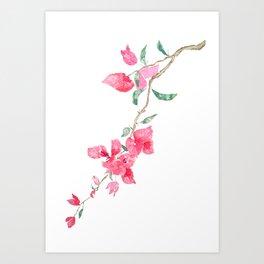 red  pink  bougainvillea watercolor Art Print