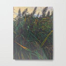 Summer wind breeze Metal Print