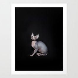 Dobby Art Print
