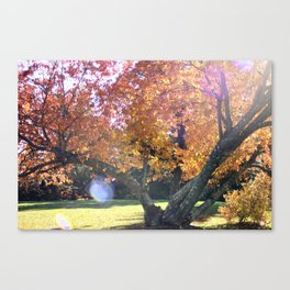 Autumn's Leaves Canvas Print