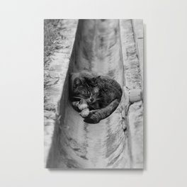 Peaceful Asleep Metal Print