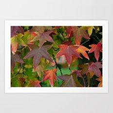 Maple Shapes Art Print