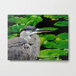Blue Heron at the pond Metal Print
